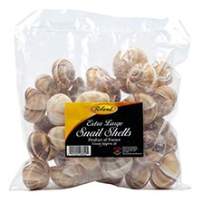 Extra Large Snail Shells